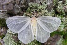 Moths and other angels