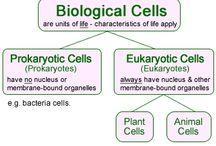 Biology/chemistry/physics elementary