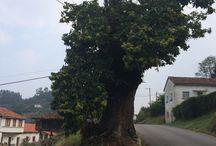 Los nuesos árboles / árboles y más árboles