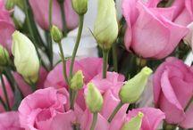 inspo blommor