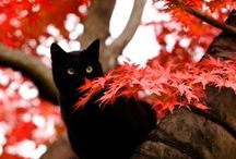 I ❤ Black Cats / by Molly Williams