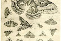 vlinders/insecten