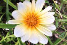 Fantasia floreale / Insieme di foto floreali