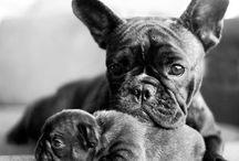 honden van Lizzy