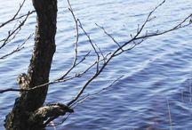 Pyhävesi