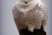 Ref: Birds