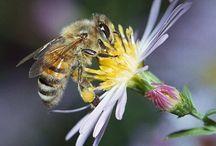 mehiläishoito