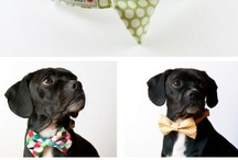 Best dressed puppers