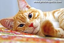 Red Cats / Images of Red cats