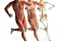 Fascinating Fascia and MELT / Fascia and Connective TIssue - Chronic Pain through dehydration - The MELT Method