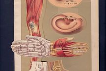 Anatomy - BOOK -