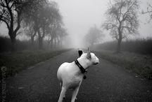 Black and white / by Patricia Rocha