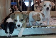 Puppies March 2014 / Puppies that we have for sale for March 2014