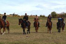 Cavalli, Horses / Incontri equini nei miei viaggi e non solo