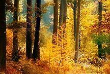 Doğa/Nature