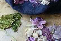 Flowers of velvet