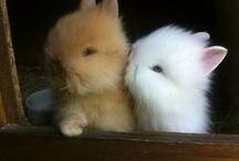 Rabbits / Zwergkaninchen