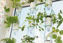 Gemüse Fensterbank