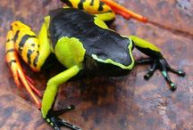 Frog etc...