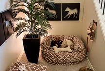 Interior Design - Pet Friendly / Tips & tricks to keep your home organized with your furry friends around.
