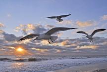 Maryland: Beaches