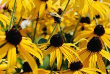 .Favorite Perennials/Grasses/Ferns/Vines