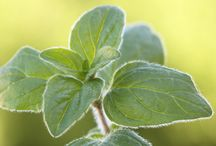 Herbs & Vitamins / by Gwen Stone