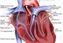 Anatomy amd physiology