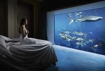 Where You Feel Home / by Joana Dagher