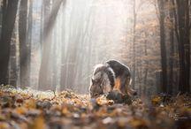 Altair - wolfdog / my beautiful czechoslovakian wolfdog :-)