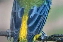 Birds sparrow