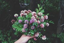 blommor o sånt