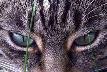 CAT's / No. 1