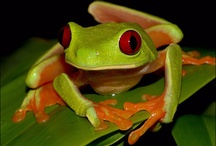 Frogs / by Linda Hurst
