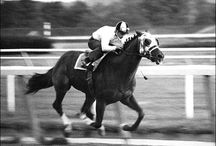 Horses and Horse Racing / by Stetson