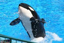 Captivity Kills / by Last Chance for Animals