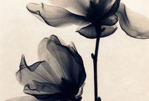 flowers ❀