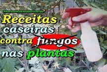 Receita para combater fungos nas plantas