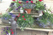 4th of July 2014! / 4th of July Celebration ideas! Plants, gardens, recipes, games, decor...