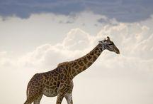 Rio's Animals / by Tori Martinez