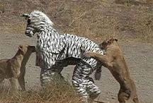 Crazy Africans! / Africa is just not about wild life. You will die laughing for sure by looking at these pics