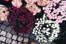 • Pretty Flowers