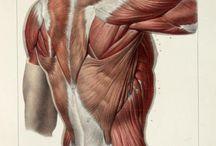 Art Inspiration ~ Anatomy