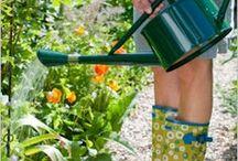 Helpful Plant Hints