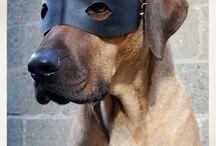 ZWIERZĘTA - PSY / wszystko o psach