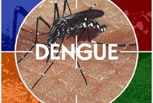 Serieuze dengue uitbraak in Thailand