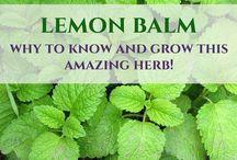 Lemon balm is an amazing