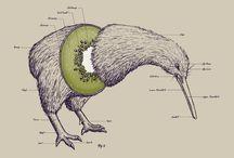 Creature Anatomy