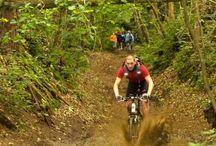 Hoge Mouw / Wandelaars, mountainbikers, joggers en ruiters komen aan hun trekken op de Hoge Mouw in Kasterlee. Kinderen kunnen zich uitleven in de speelbossen.