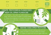 Garden/ Pests and diseases etc.